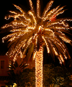 Palm Lights
